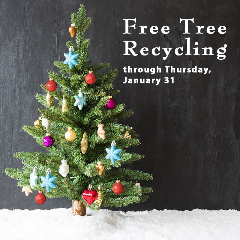 Tree Recycling Information